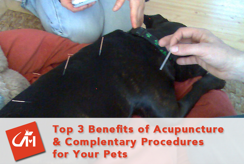 Top 3 Benefits of Acupuncture & Complementary Medicine For Your Pets