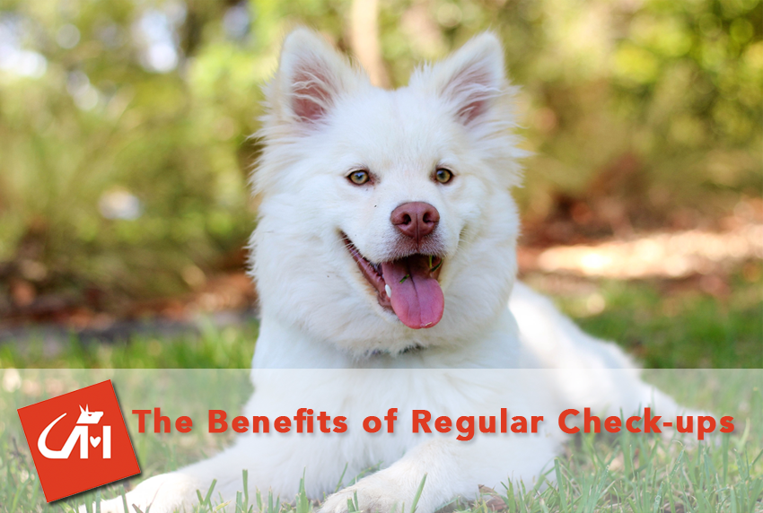 The Benefits of Regular Checkups
