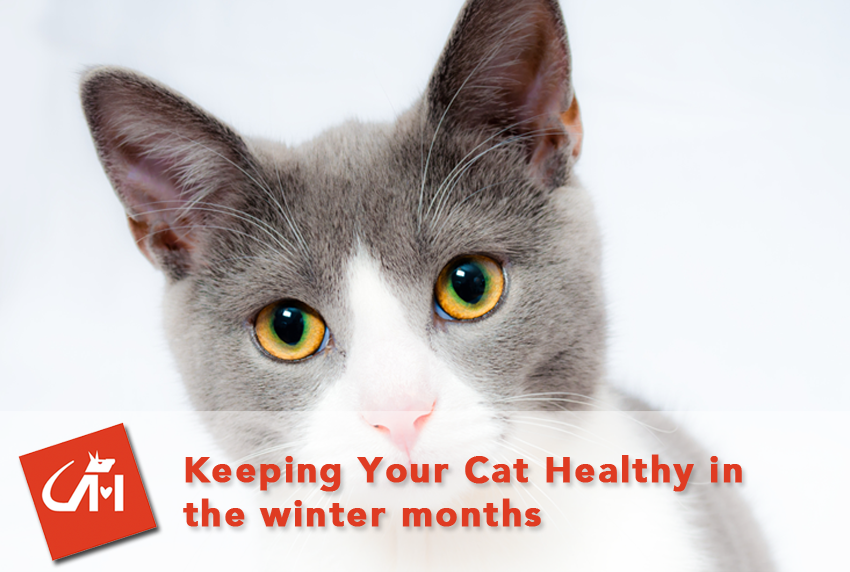 Keeping Your Cat Healthy In the Winter Months
